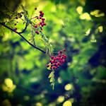 Summer Berries by MarcoHeisler