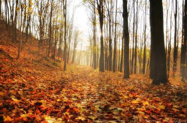 Carpet Of Leaves by MarcoHeisler