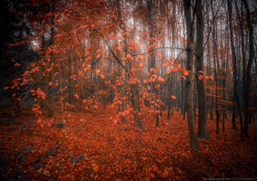 Red Leaves by MarcoHeisler