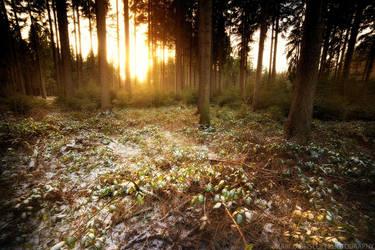 Sunlit Carpet by MarcoHeisler