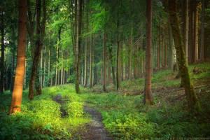 Feeling Green by MarcoHeisler