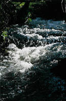 Devonshire stream by sunnie