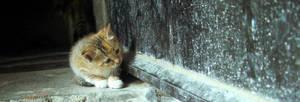 Curiosity by geckokid