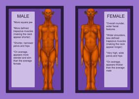 Xzeejees - basic sexual dimorphism by RRedolfi
