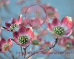 Odd Bloom by artjte