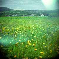wildflowers by cedmundmiller
