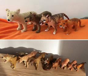 Thylacine collection update by JaylacineChiboa