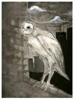 Barn Owl by fresh4u