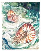 Nautilus by fresh4u