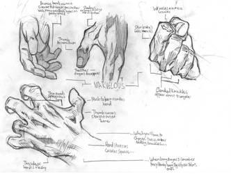 Hand Study by Atlas0