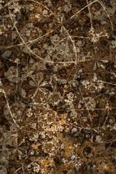 Detritus by Platinus
