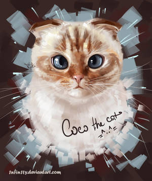 Coco the cat =^..^= by 1NFIN1TY