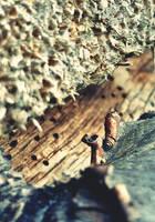 Wood cut outs - Macro Shot by idlebg