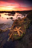 Fallen Star by Inebriantia
