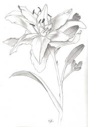 flower by feedmeplz