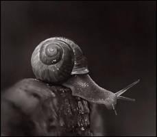 Sketchpaint Snail by jezebel