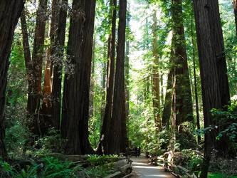 Muir Woods California by Paganheart22