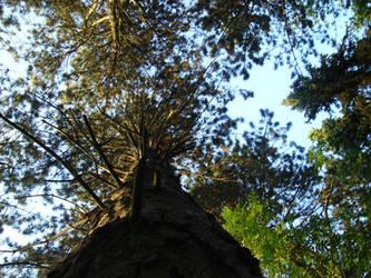 climb the tree by jambek