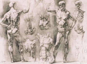 Male Figure Study by valentinmelik