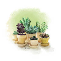 Potted Plants by katiepox