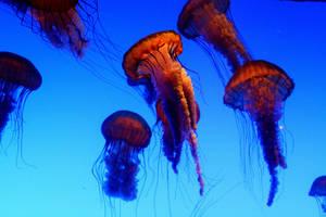 Jelly Fish by znamenny