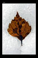 Leaf by jimeh