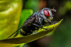 mosca macro 4 by ssabbath
