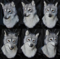Lobo by SnowVolkolak