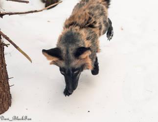 Handmade Poseable Fox Toy #7 by SnowVolkolak
