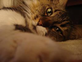 My Cat by tuffix