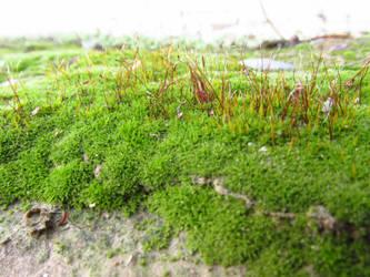 Algae 2 by PunkyDoodle96