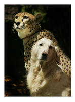 Companions by gennia