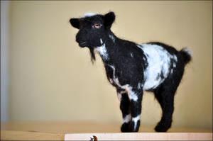 Nigerian Dwarf Goat by nikkiburr