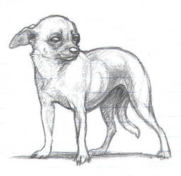 Chihuahua by nikkiburr