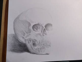 Summer course - skull by Jinaum