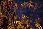 -- sealight IV -- by Torvon