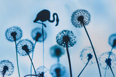 Who lives in dandelions? by dinabelenko