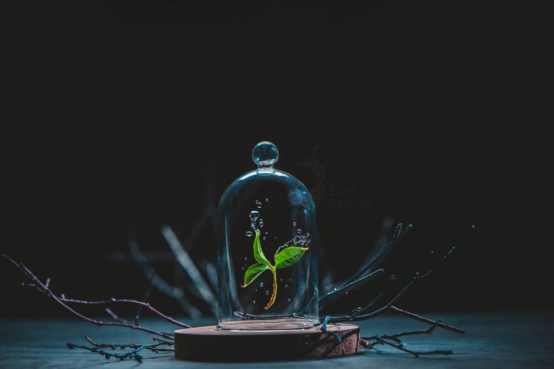Spring Leaf by dinabelenko