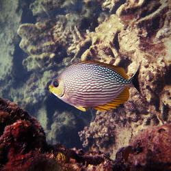 Fishy by markie2k