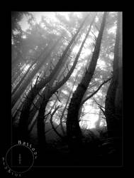 Summer 09- Fog Bound Woods III by OregonArtTeacher
