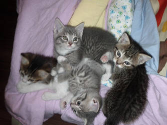 Kitty Pile by skookyspry