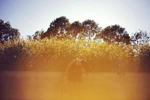 Summer by ByLaauraa