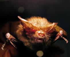 Spooky Bat by ozplasmic