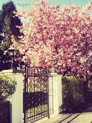 Cherry blossom by MariaG93