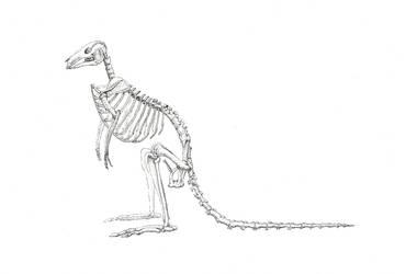 WG Kangaroo Anatomy - 01 Skeleton - scan - 600dpi  by JodieQuinn