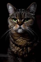 Portrait of a cat by Parazelsus