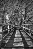 Bridge by ironiclensflare