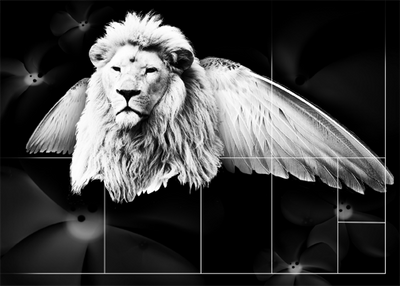 Lion Designs Layout by DarciGibson