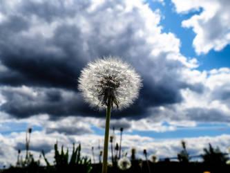 Dandelion by agay62