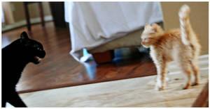 Mimi meets Tiger by devilicious